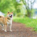 血糖値の正常値の話を聞く犬