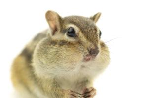 糖尿病の食事の食べ方 早食いは避けましょう。
