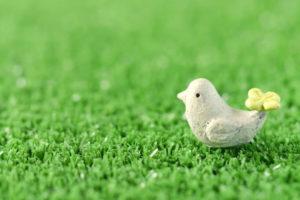 1型糖尿病とSGLT2阻害薬(白い鳥)